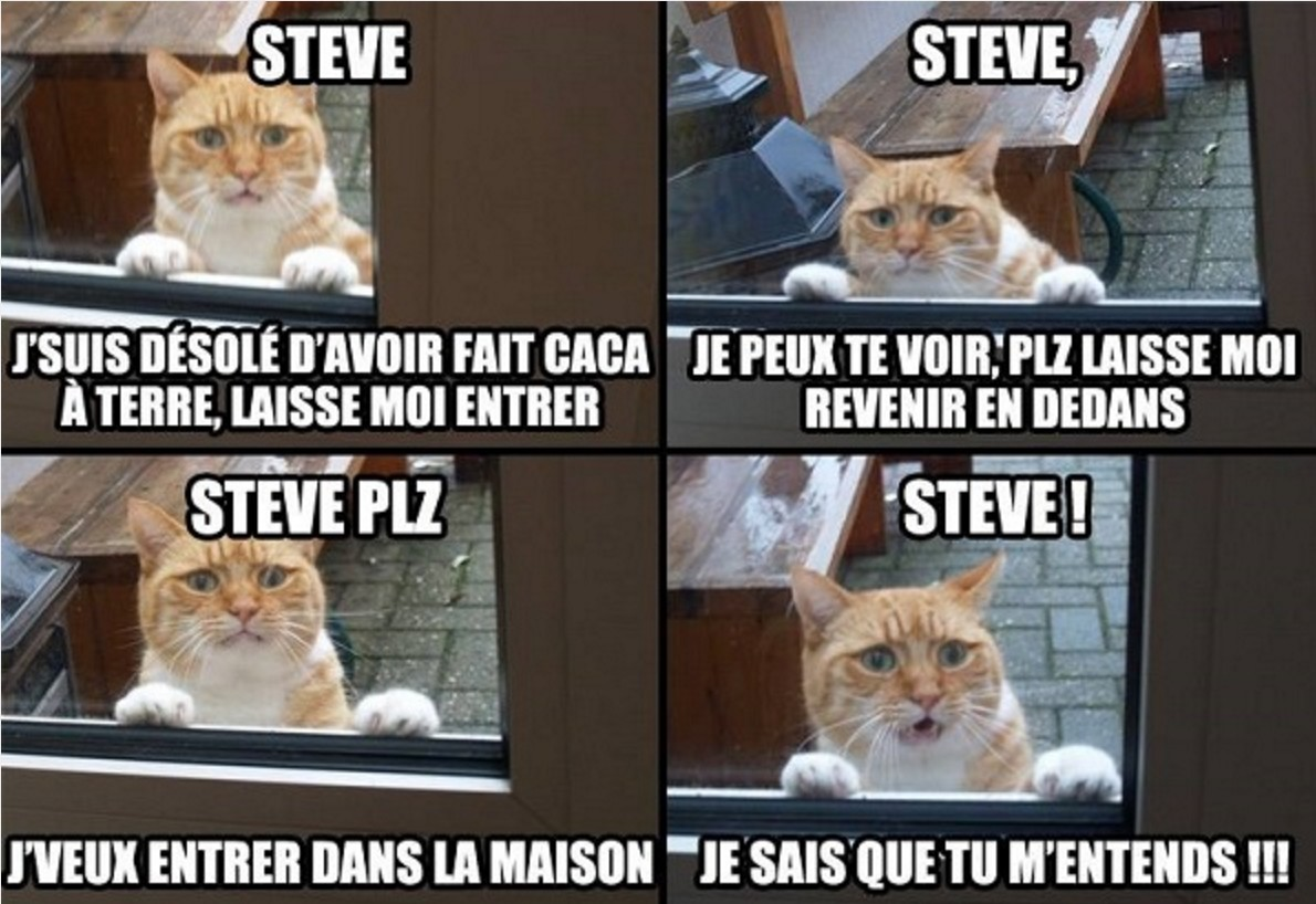 chat traduction